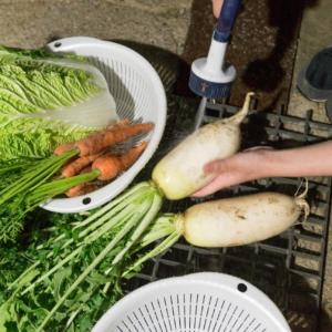 採れたての野菜を調理